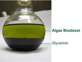 Biodiesel-and-Glycerine-from-Algae