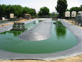 Algae an actual green alternative to fossil fuels for Design of evaporation pond