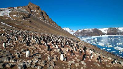 Adelie penguins nesting on terrestrial shore where glaciers have recently receded http://www.oceanlight.com/log/category/wildlife/penguin