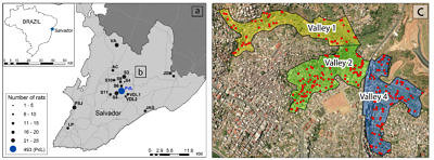 Sampling map of Norway rats across Salvador (left) and within the Pau da Lima favela (right).